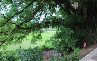 The Balete Tree – where they got the name of the town.